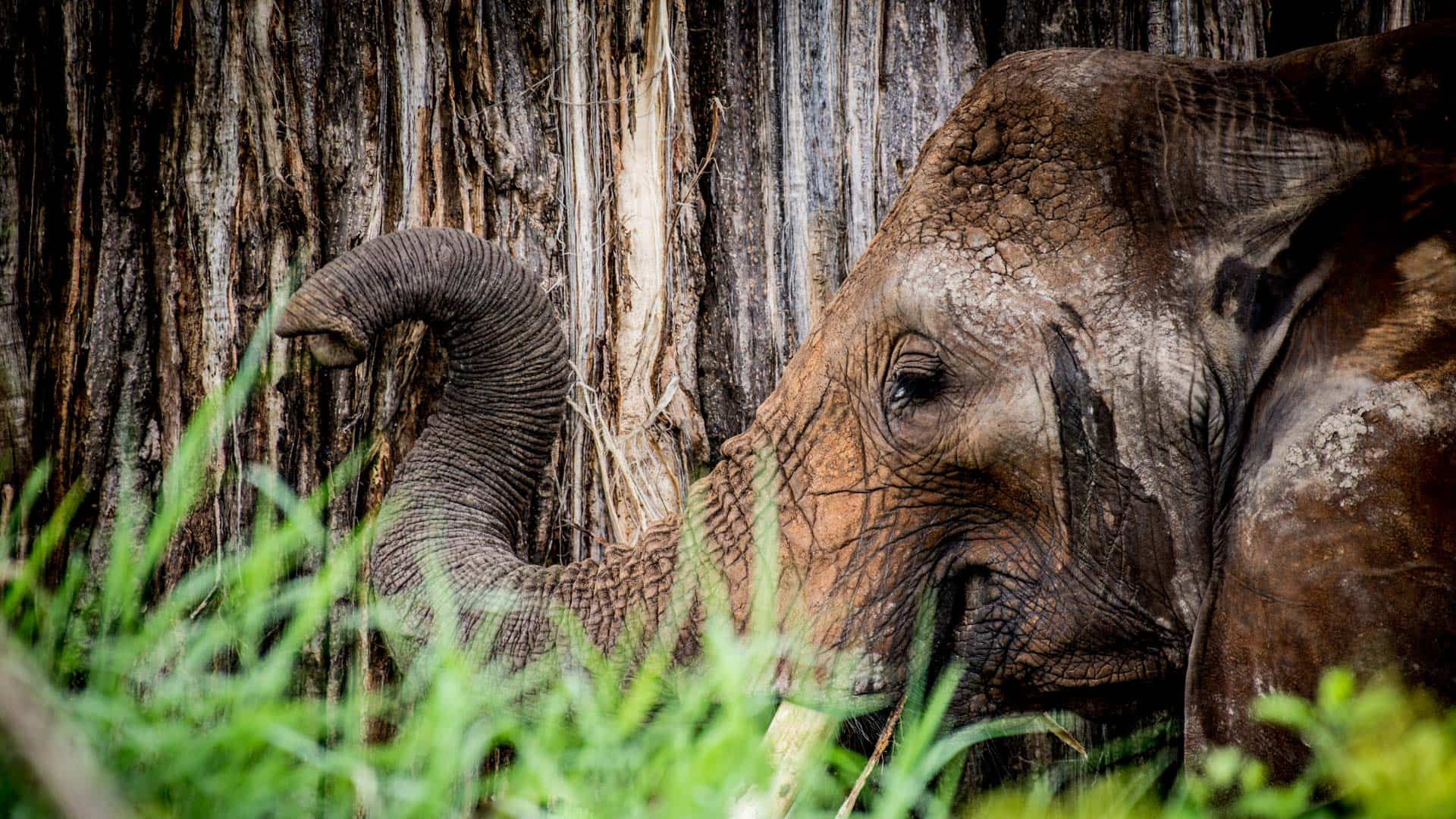 Scott Brills Presents: Tanzanian Safari 2017 (November)