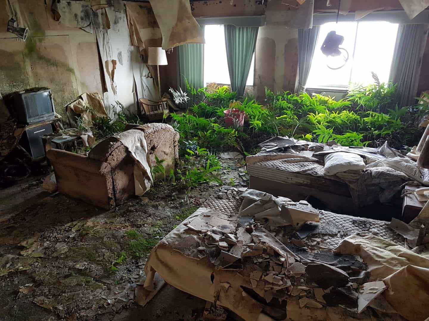 Nature Reclaims a Room